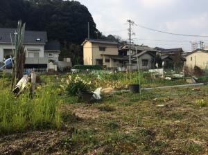 The garden along the way